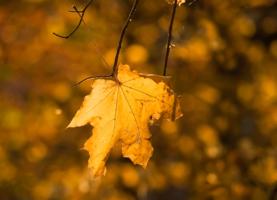 Не отпускает осень.....
