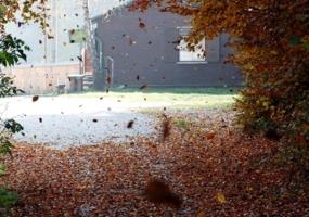 а листья падают, падают....