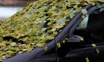 Реки листьев