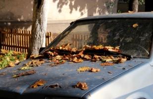 Старая добрая осень