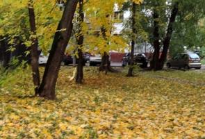 Листья жёлтые медленно падают...