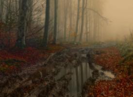Осенняя лужа в туманном лесу