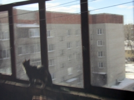 Штрих-кошка