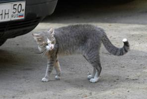 Штрих-кот Не трожь!
