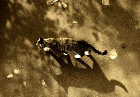 Кот и его тень