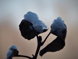 Встреча осени  с зимой