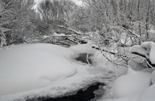 Снежные джунгли
