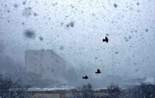 Полет в снегопад