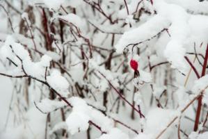 Снежное одеяло
