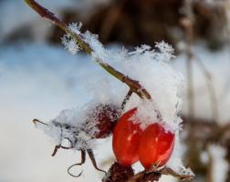 Зимнее украшение