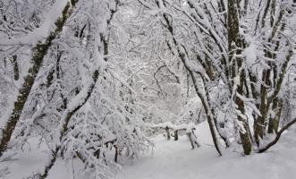 Дорога в снежную сказку