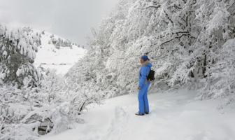 Из лесу вышла, был сильный мороз