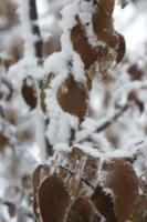 Листья и снег