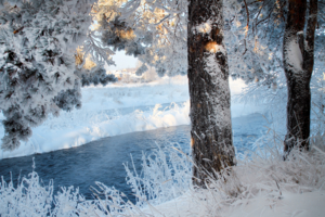 Морозззное утро ))
