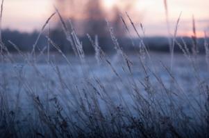 Замерзшая трава. Холодный закат
