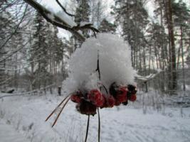 Под снежной шапочкой