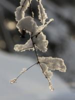 На зимнем солнышке