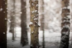 Снег, как пух на дереве