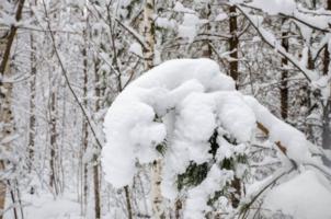 Снежная Каштанка
