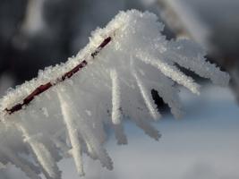Снежная многоножка