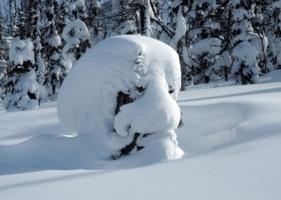 Мороз снежком укутывал...