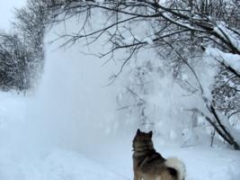 Снежный дождь