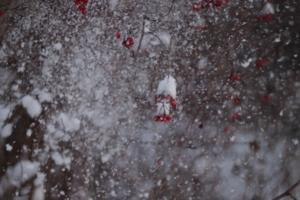 Ягоды и снег