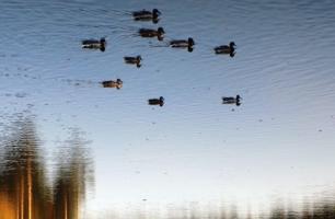 Утки по небу плывут