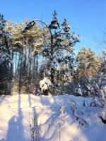 Тени от деревьев
