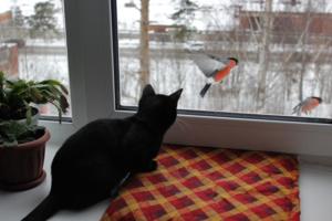 Снегири за окном