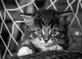 Пока ещё маленький кот