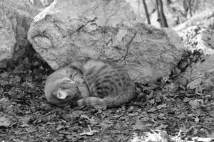 Сладко спится в лесу