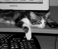 Стерегу компьютерную мышь