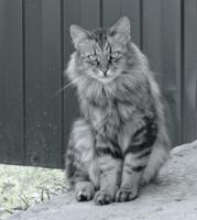 Кот подзаборный