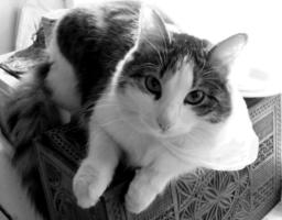 Кот из пакета