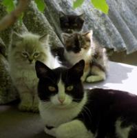 Ч/Б кошка и цветные котята