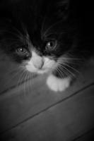 просто котёнок