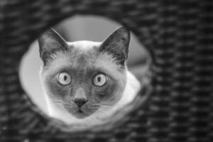 Глаза в иллюминаторе