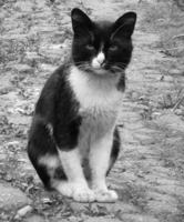 Ч/б кот