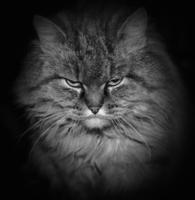 Осторожно, злая котЭ