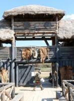 В гости к викингам