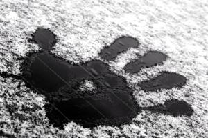 Следы зимы.