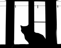 А за окном...
