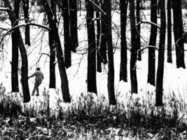 В нарисованном лесу