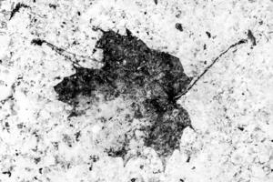 Отпечаток осени