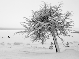 Снег лег на плечи