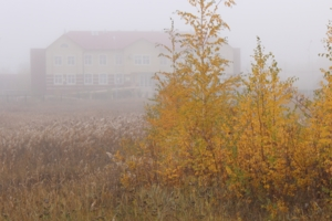 В осеннем тумане