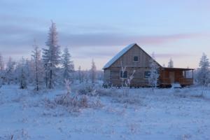 В Арктической лесотундре