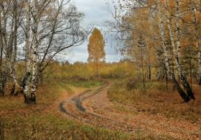 Дорожки листвой запорошены...