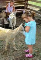 девчатам о козлятах